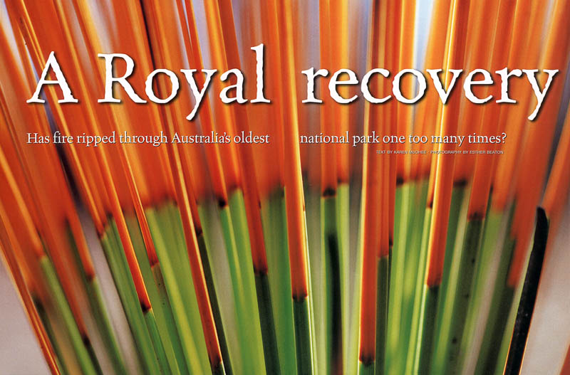A Royal Recovery - Australian Geographic feature