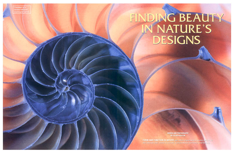Finding Beauty in Nature's Designs - GEO magazine feature