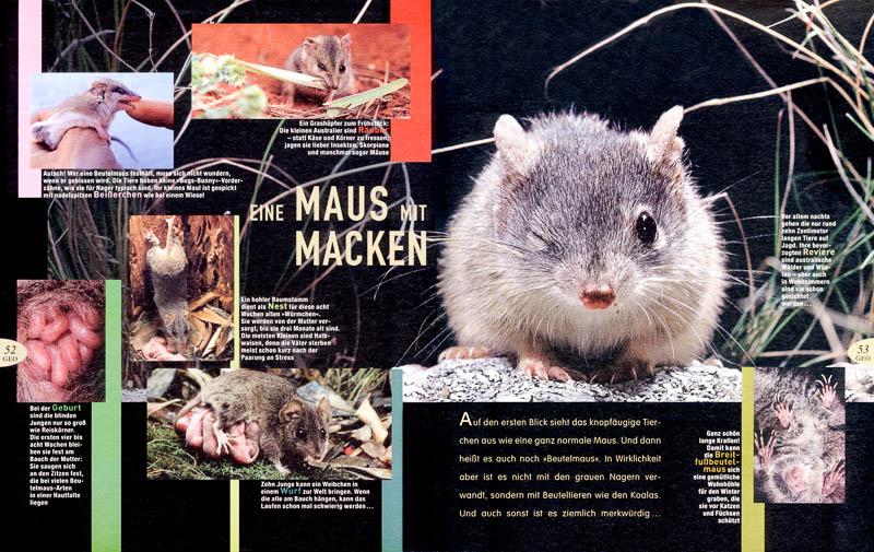 Eine Maus mit Macken - Geolino feature about Dasyurids