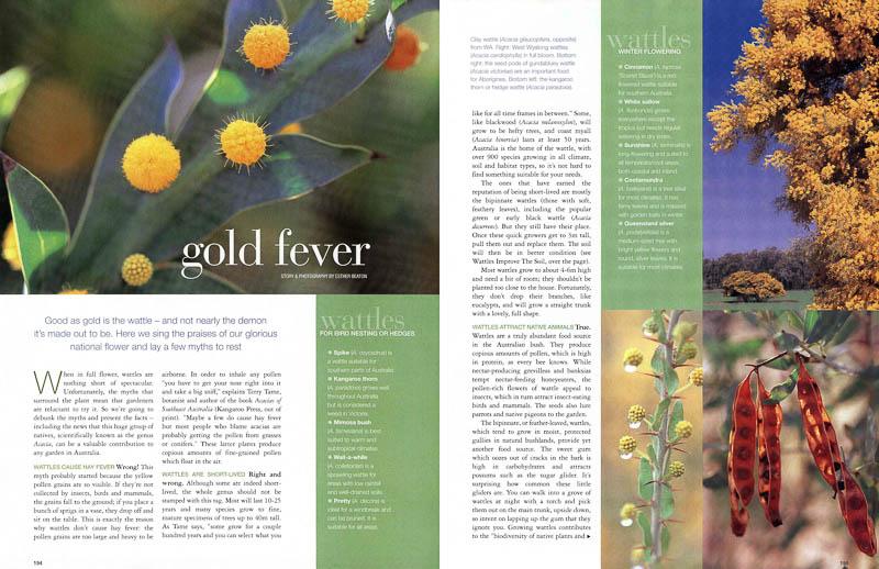 Gold Fever - Burke's Backyard magazine feature about wattles