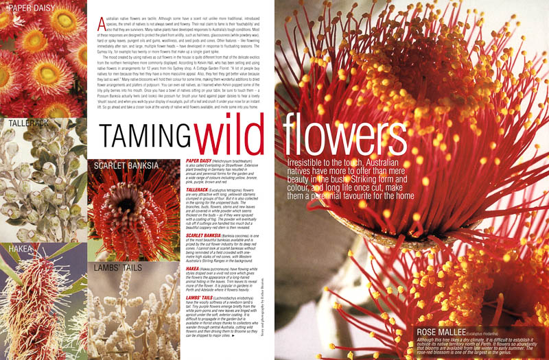 Taming Wild Flowers feature for House and Garden magazine