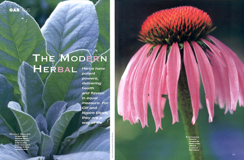 A Modern Herbal feature article for House and Garden magazine