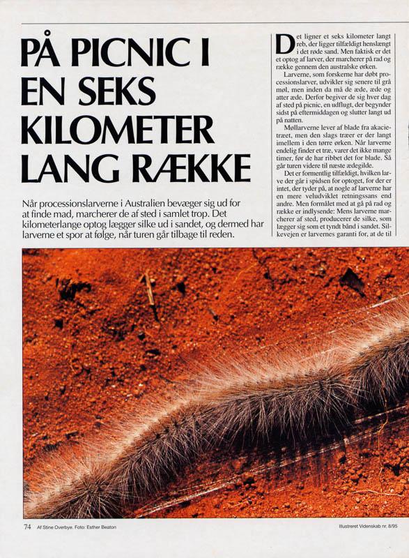 Illustreret Videnskab desert caterpillars