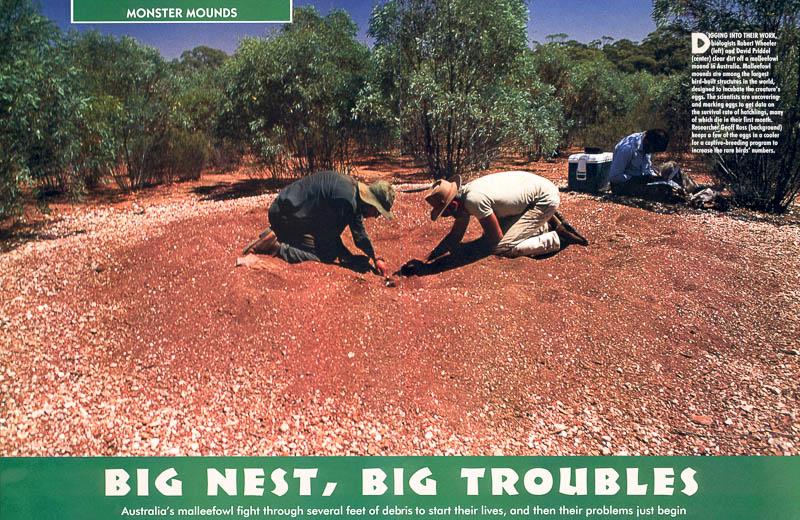 International Wildlife magazine feature Big Nest Big Troubles
