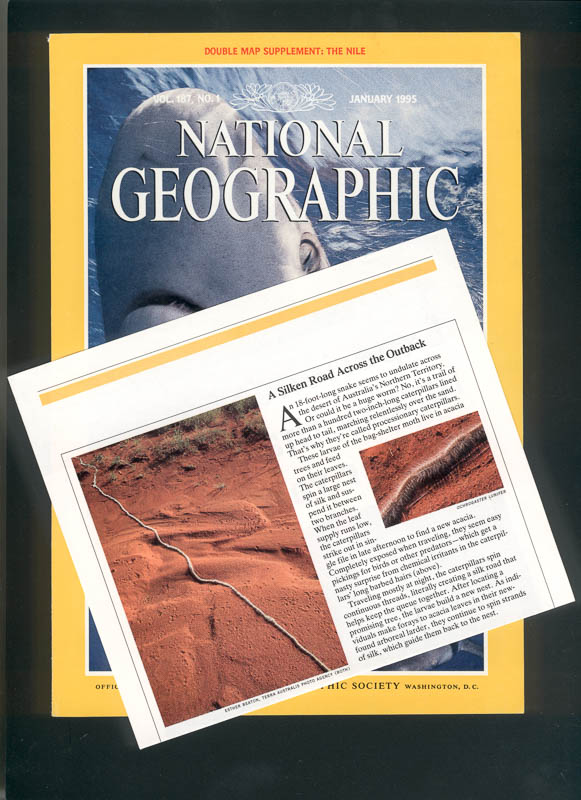 National Geographic caterpillars in desert article